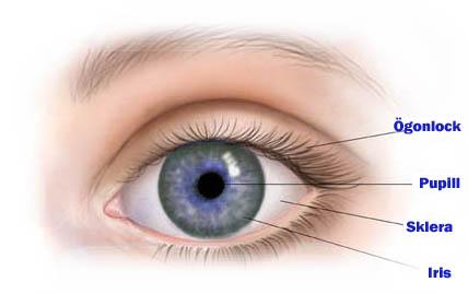 Ögonlaser - Allt du behöver veta om LASIK 7d088f3a5f49f